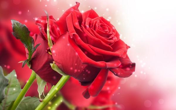 Песни о розах